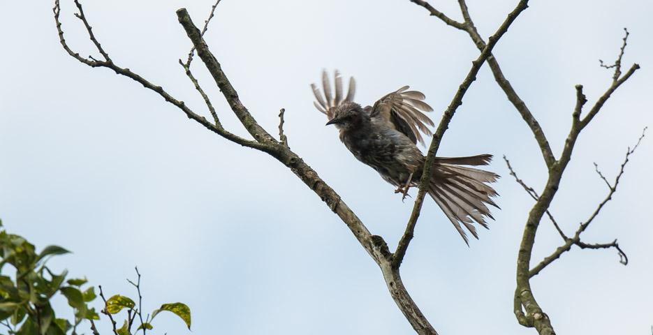瀬上市民の森 バナー  飛び立つヒヨドリ _DSC6130.jpg